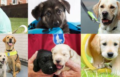 guide dog fundraiser